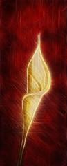 Kala flower fractal background