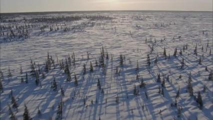 snow sunrise sunset trees