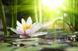 lotus flower - 76650282