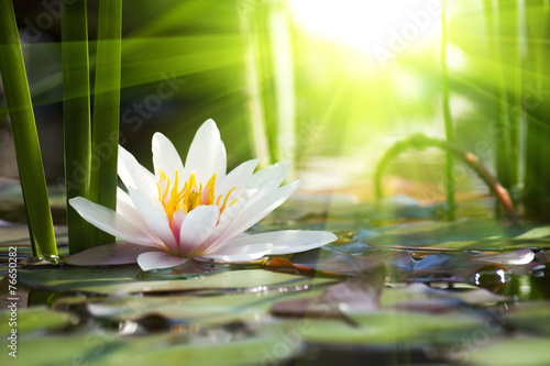 Foto op Canvas Water planten lotus flower