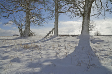 Winter scene with trees and shadows