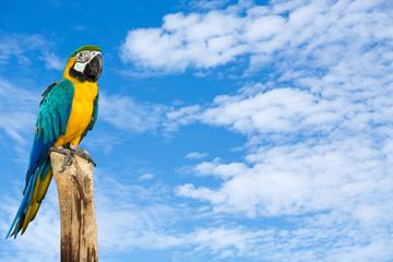 Macaw bird with blue sky background
