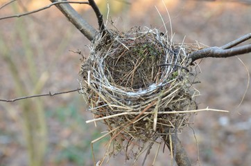 Kleines  Vogelnest im Baum
