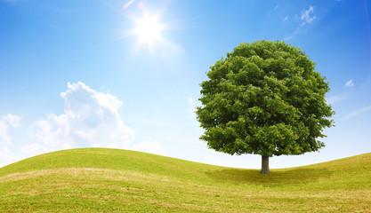 Idyllische Landschaft mit Baum