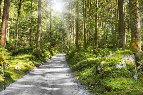 Leinwandbild Motiv sentier de montagne