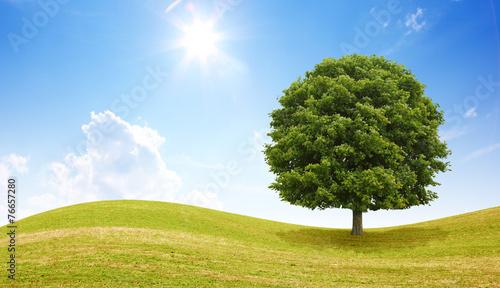 canvas print picture Idyllische Landschaft mit Baum