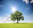 canvas print picture - Baum auf dem Land