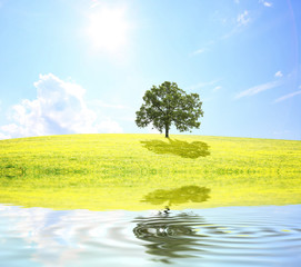 Baum auf dem Feld neben einem See