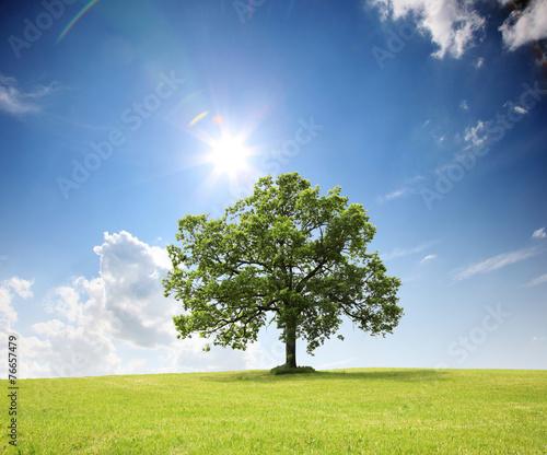 canvas print picture Baum auf dem Land