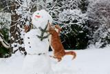 Katze köpft Schneemann