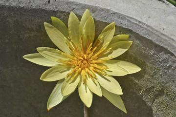 fiore asiatico