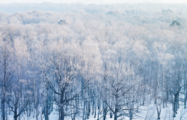 above view on frozen woods in cold winter