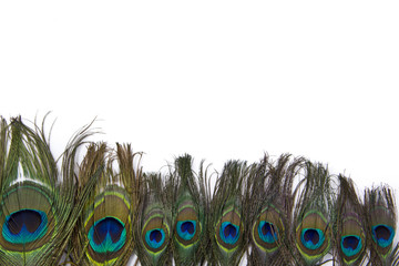 peacock feathers isolated white background