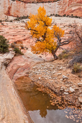 Fall in Zion National Park