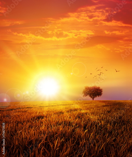 Aluminium Zonsondergang sunset on the meadow