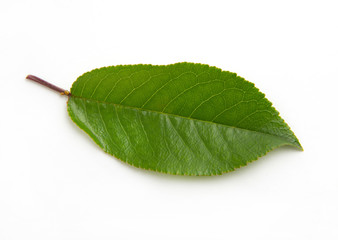 cherry green leaf isolated on white background
