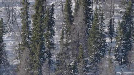 Frozen Tundra Elk