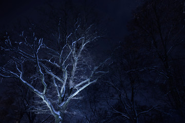 bare tree with snow at night