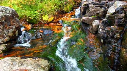National Forest Cascade Montana