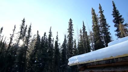 Snow Trees Ice Winter
