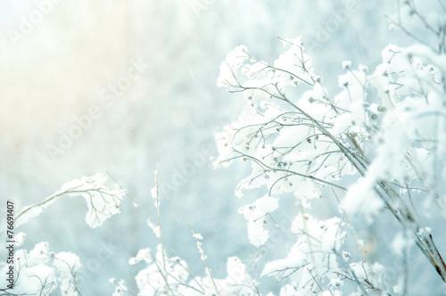 White winter background. - 76691407