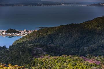 沖縄 塩屋湾と桜