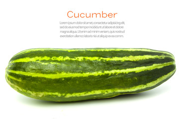 green cucumber isolated on white background, Cucumis sativus