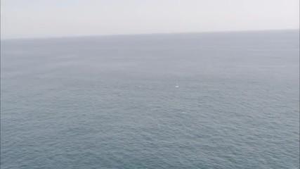 Pelicans Ocean Birds