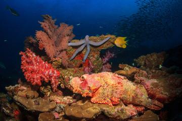 Scorpionfish and Starfish