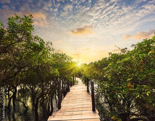 drewniany-most-w-zalewajacej-las-tropikalny-dzungli-mangrowe