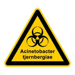 wso128 WarnSchildOrange - acinetobacter tjernbergiae - g3053