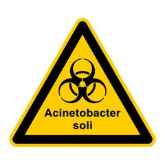 wso138 WarnSchildOrange - acinetobacter soli - g306