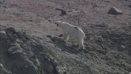 Polar Bear Trails Coastline