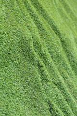 abstract grass texture background, artificial green grass