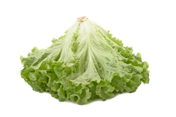 Fresh green lettuce isolated on white background