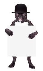 French bulldog in a black hat
