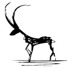 antelope