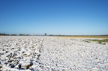 Snowy field under a clear sky in winter