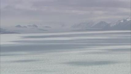 Arctic Tundra Polar Bears