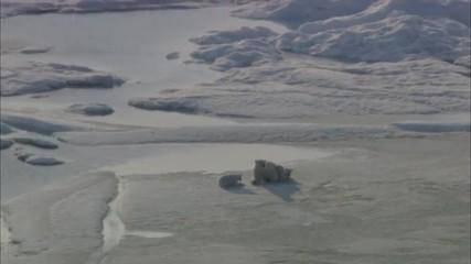 Polar Bears Glaciers Mountains Snow