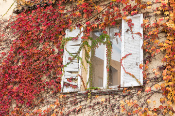 white window inside vine-covered wall, red leaves