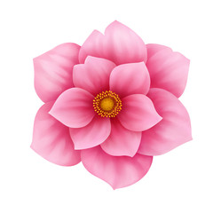 Vector anemone pink flower decorative illustration isolated
