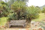 Bench beneath cycads in Kirstenbosch poster