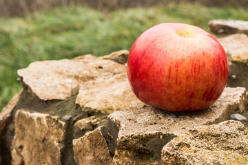Apple red, fresh and ripe