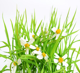 Spring grass and flowers isolated on White