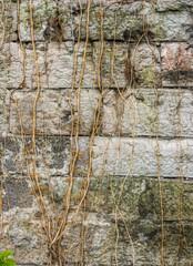 Climbing plants on abandoned stone granite wall