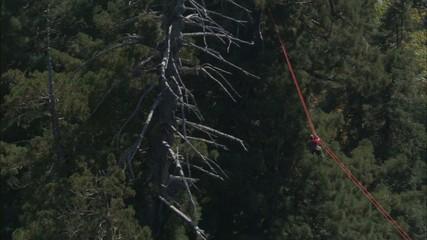 Forrest Treetop Zip Lining