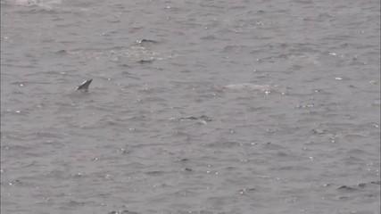Dolphins Ocean Pods Mammal
