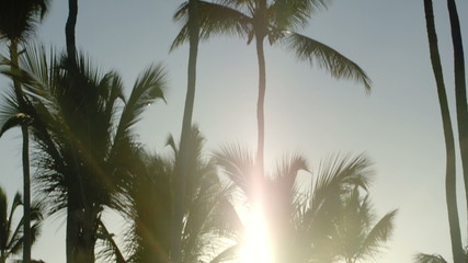 Bright evening sun shining among the palms