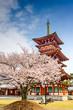 Nara, Japan at Yakushi-ji Temple in the Spring